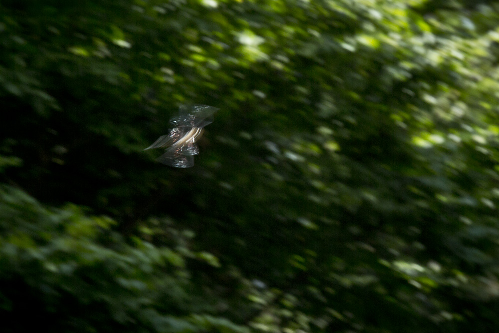 photo: Dragonfly in motion flying, english country garden by British Photographer Margaret, 031-sml