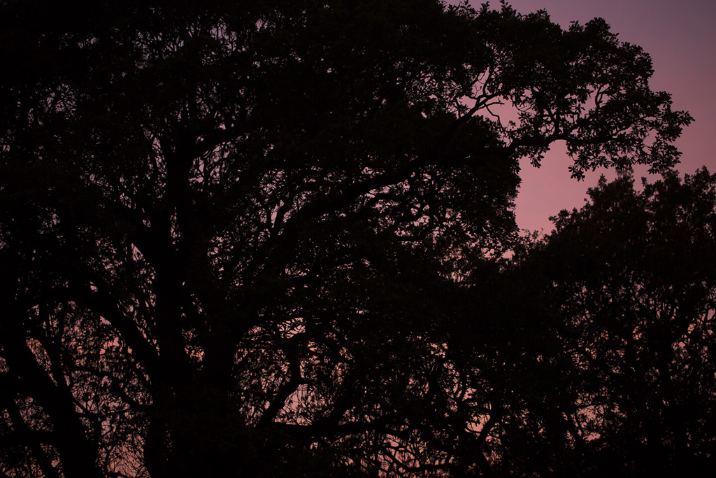 photo: atmospheric, pink, purple, sunset, trees, by British Photographer