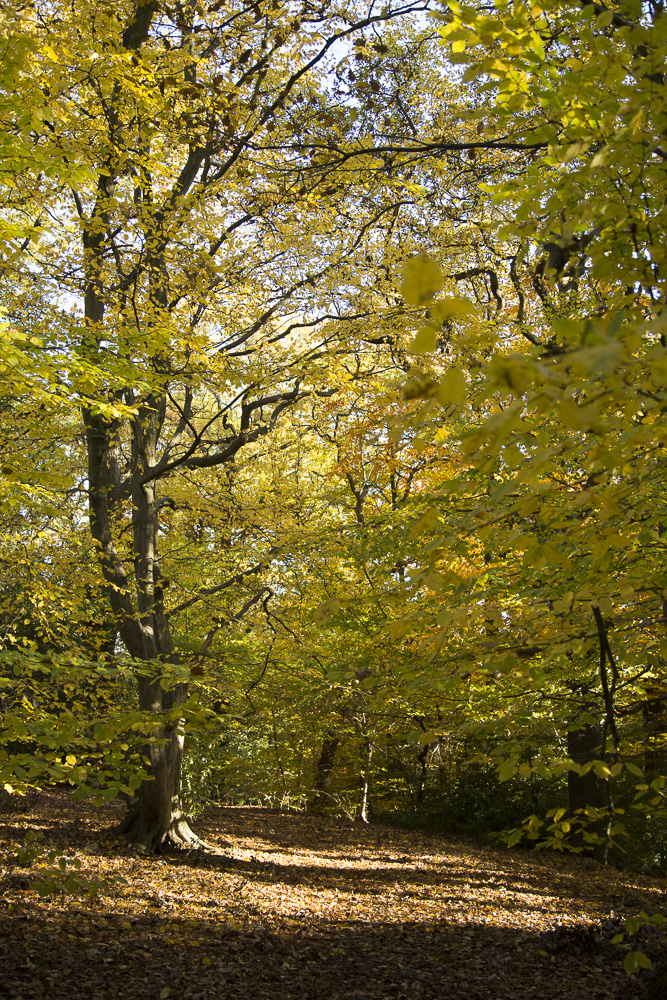 Photo: autumnal wood scene, colourful autumn leaves, by Photographer Margaret Yescombe, north London, FO6A0594