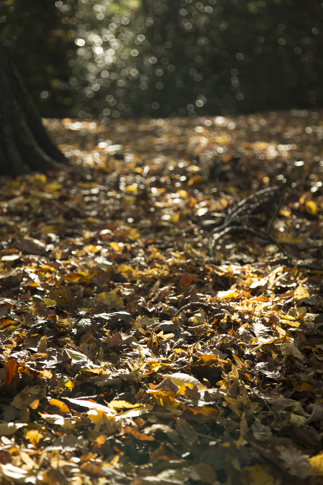 photo: woodland leaves on floor, by British photographer Margaret Yescombe, London 20131119-FO6A0605