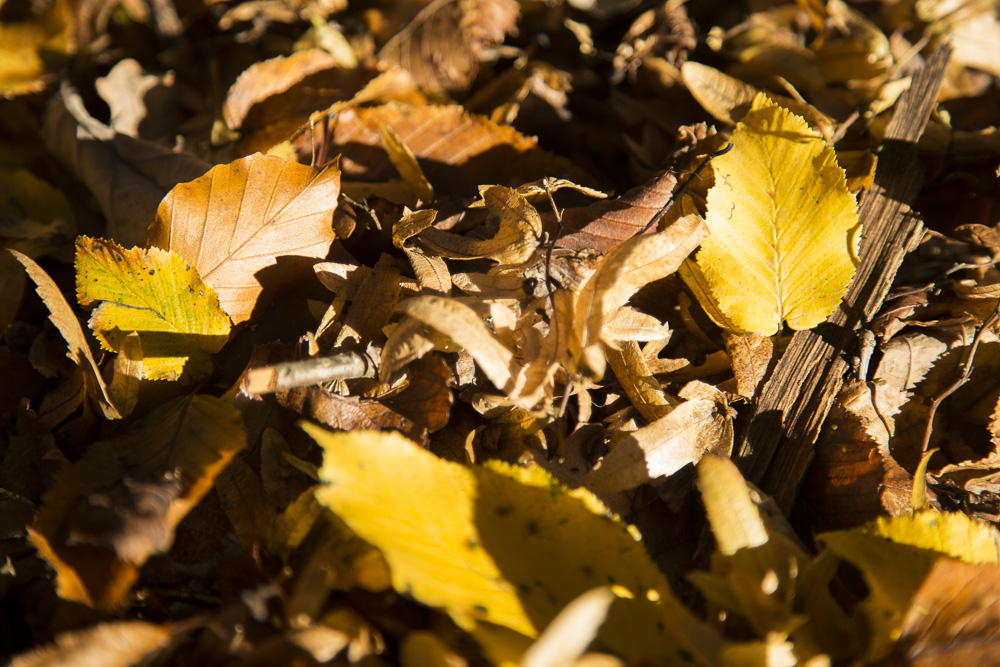 Photo: leaves on floor in sunlight, autumn, photographer london, 20131119-FO6A0615