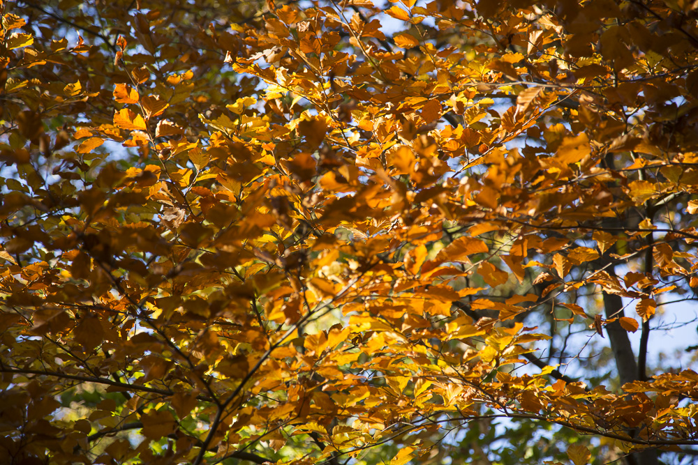 photo: orange yellow and green colourful autumn leaves, by British Photographer London, FO6A0621