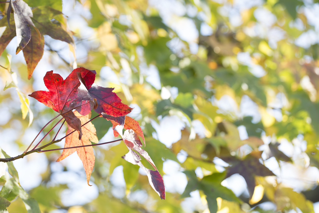 photo: autumn, colourful, green, leaves, orange, purple, Red, sky, tree